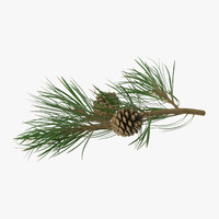 pine tree 02 3d model
