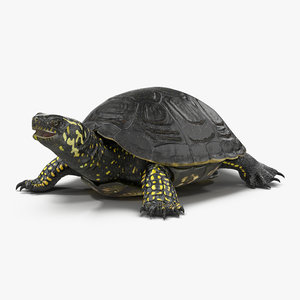 european pond turtle 3ds