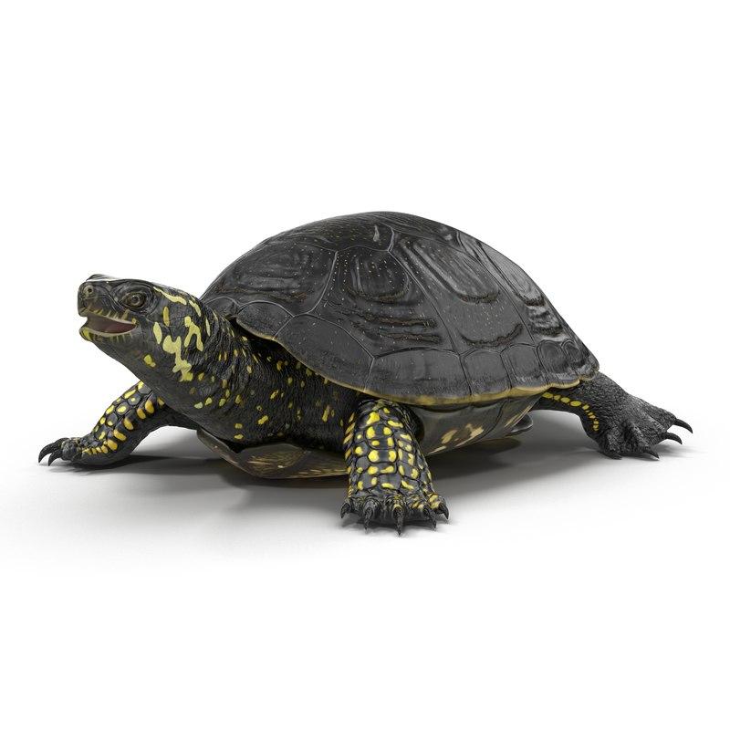 european pond turtle 3ds