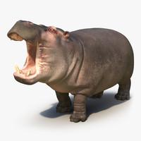 3d 3ds hippopotamus pose 2