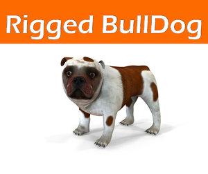 bulldog rigged max