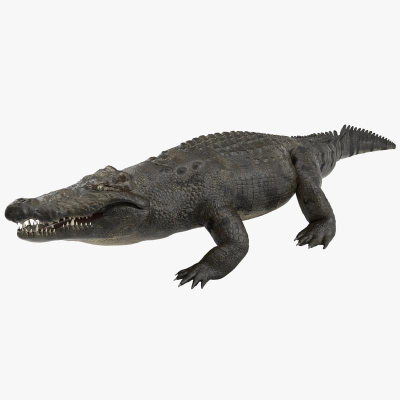 3d model large nile crocodile rigged