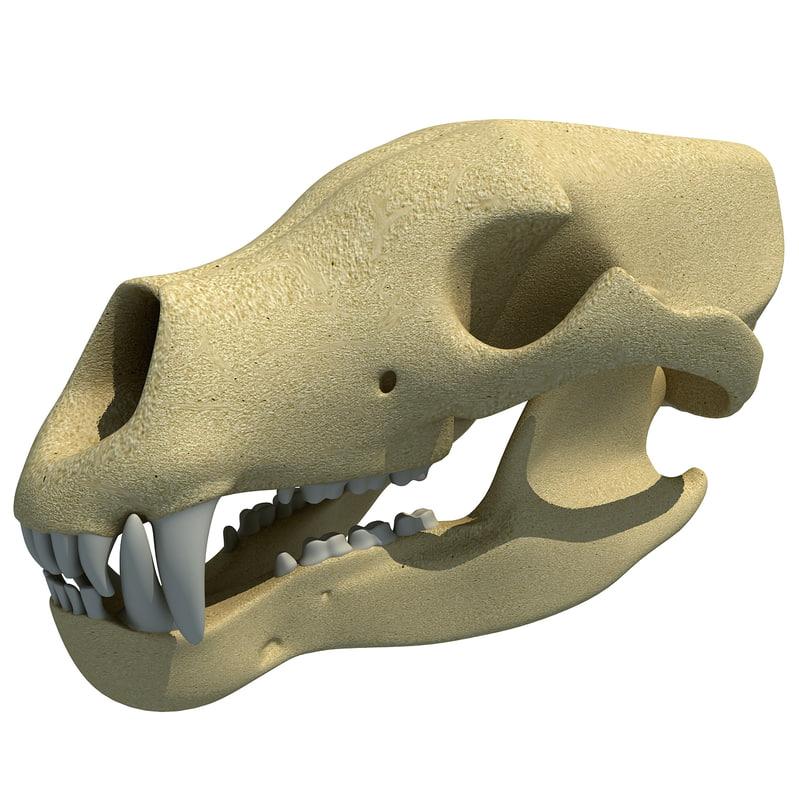 bear skull skeleton 3d model