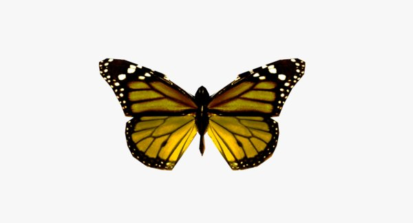 butterfly 3ds
