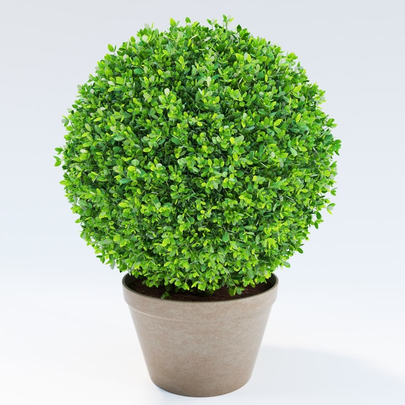 boxwood bush 3d max