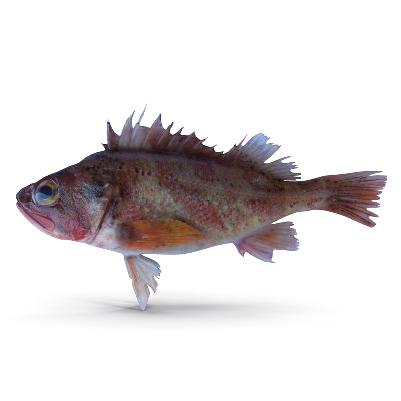 3d model rockfish rock fish