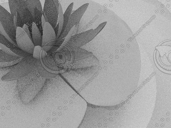 3d model of waterlily