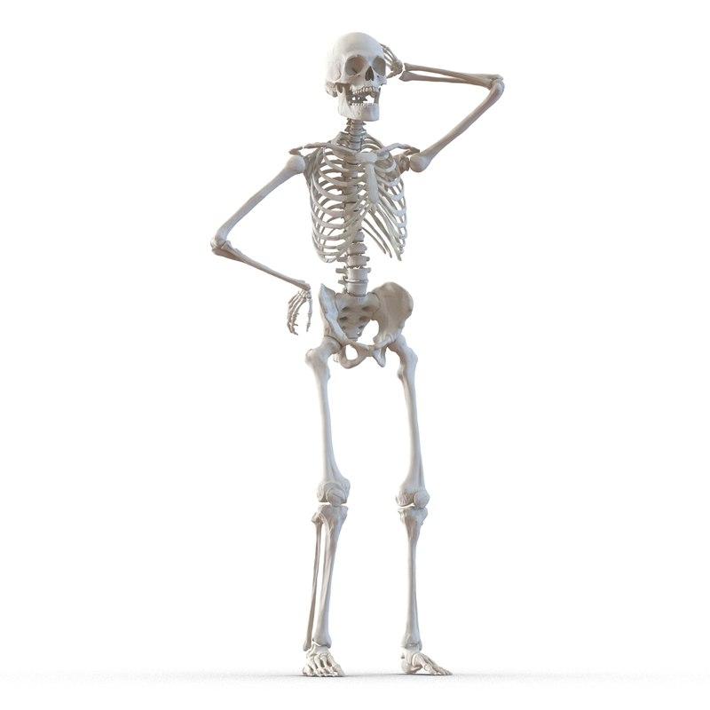 human male skeleton rigged 3d model