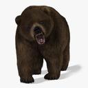 Bear (2) (Brown) (Animated) (Fur)