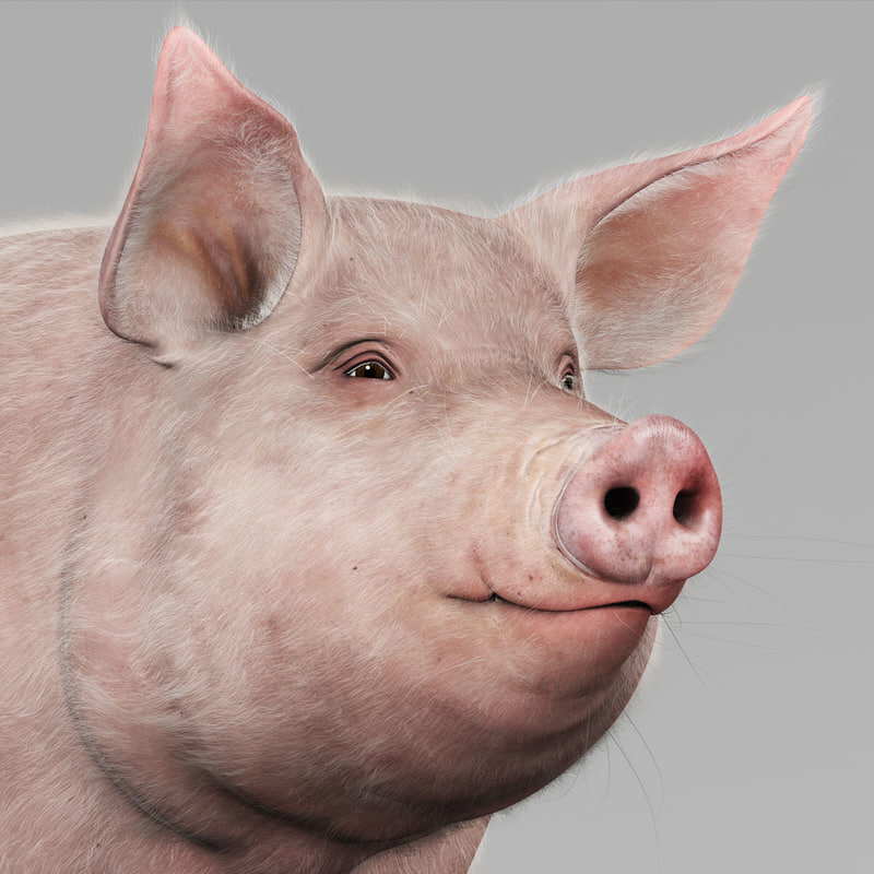 3d model pig adult female fur