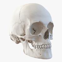 3d female human skull