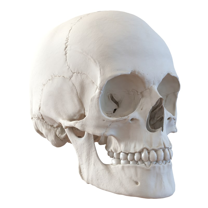 Human Female Partial Skull with Cribra Orbitalia - Bone ...  |Female Human Skull