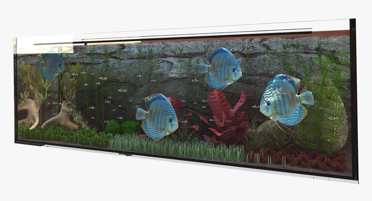 3d fish plant rocks model