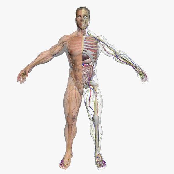 male body 3d fbx