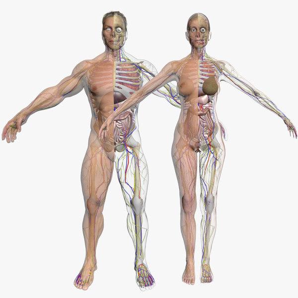 male female body combo 3d model
