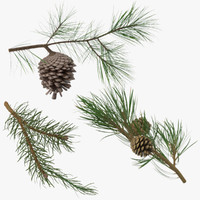 Pine Tree Sprigs Collection