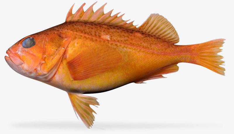greenspotted rockfish 3d fbx