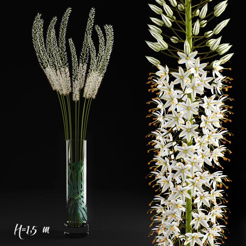 3d eremurus flowers plants