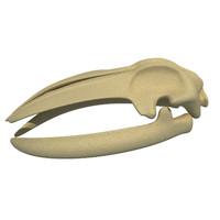 3d model whale skull skeleton