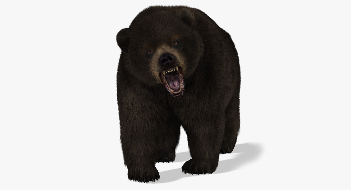 bear 2 fur animation ma
