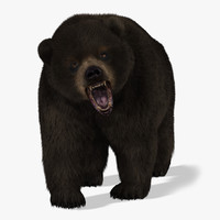 Bear (2) (Black) (Animated) (Fur)