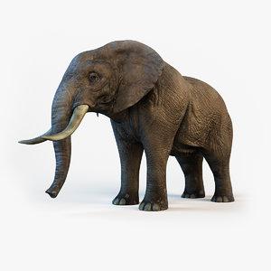 3d elephant