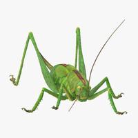 Grasshopper Standing