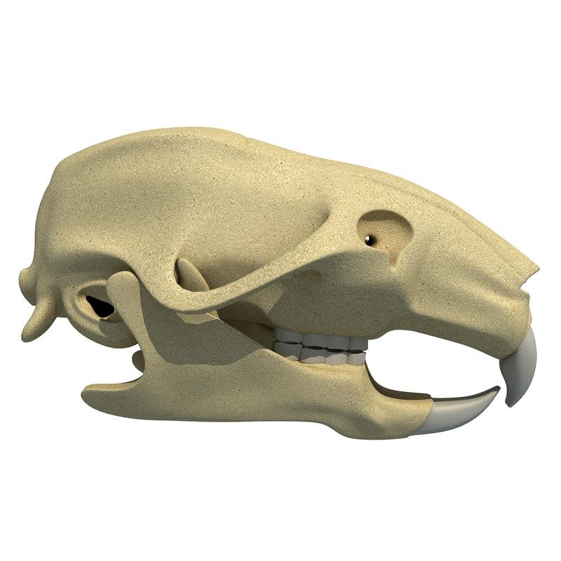 rat skull obj