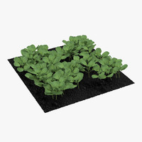 young cabbage plants garden 3d 3ds