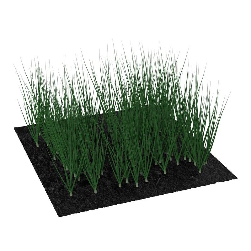 3d young onion plants garden model