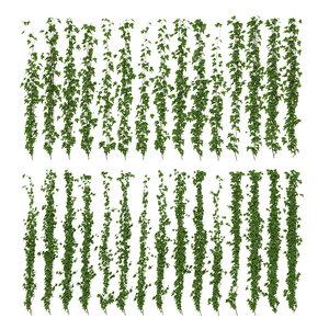 wall ivy max