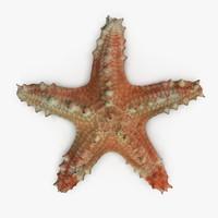 pentaceraster alveolatus starfish 3d obj
