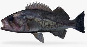 fbx blue rockfish