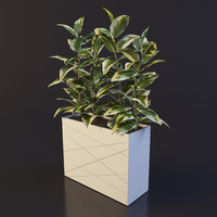 ficus plant pot 3ds