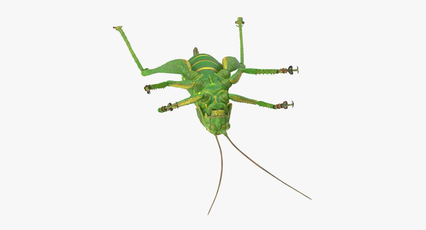 dead grasshopper 3d obj