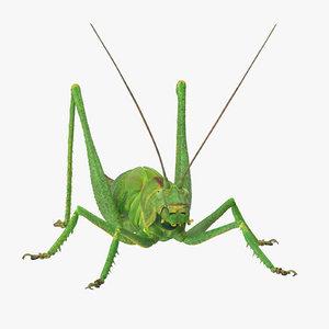 3d rigged grasshopper model