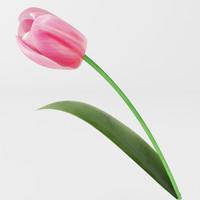 pink tulip max