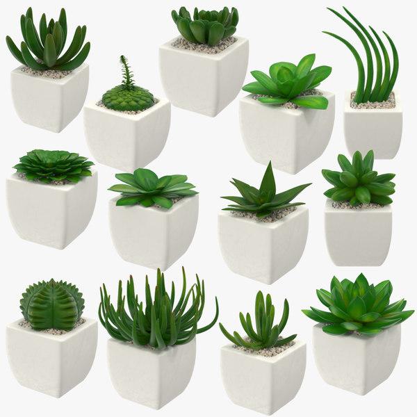 3d succulents 01