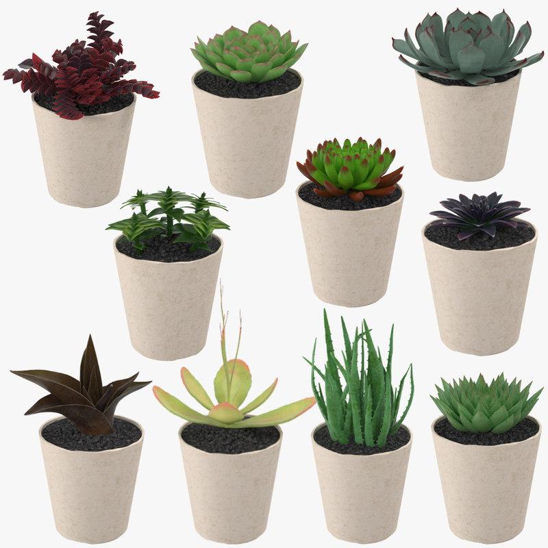 succulents 3d model