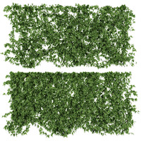 wall vine leaves 3d max