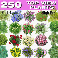 TOP VIEW PLANTS