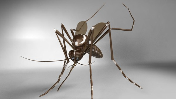 3d aedes aegypti mosquito