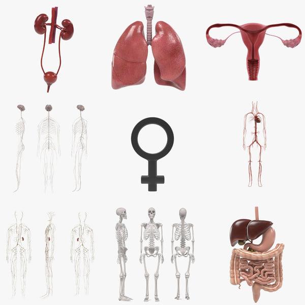female organs 3ds