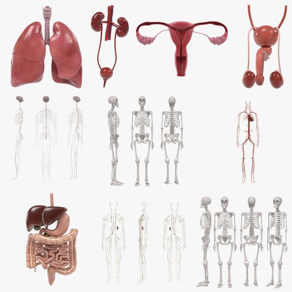 3d male female organs
