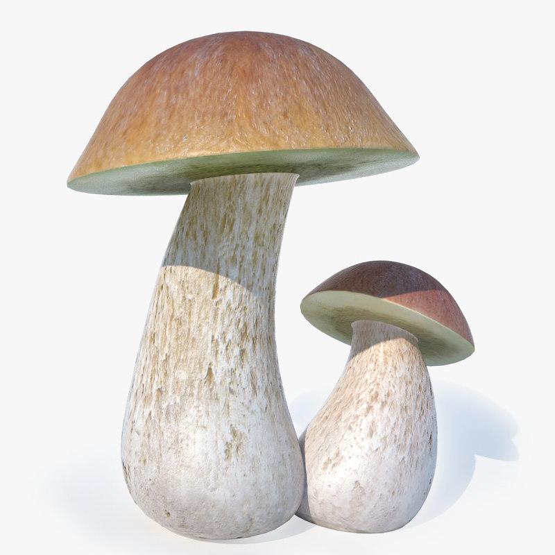 mushroom cep max
