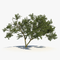 scanned african tree leaves 3d model