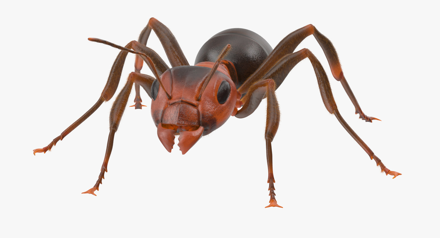 3d rigged ant - model