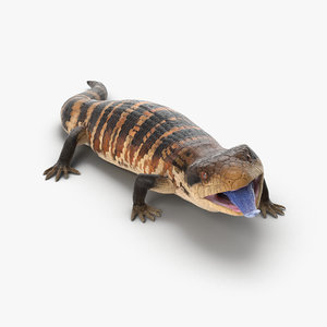 blue tongued skink rigged max
