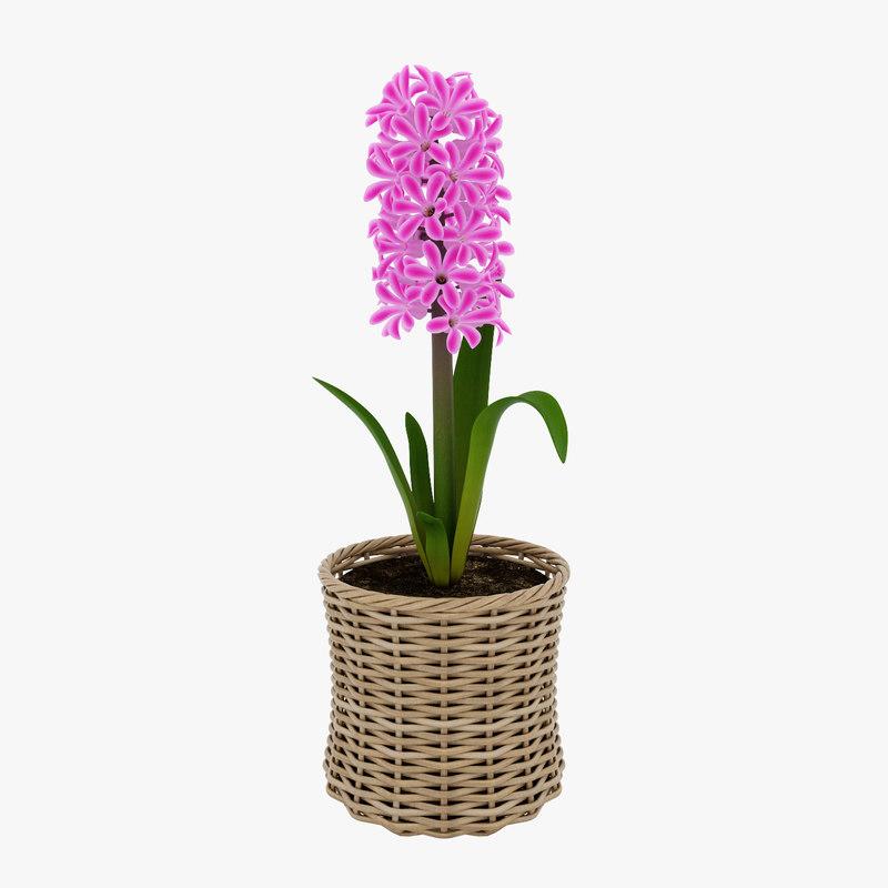 hyacinth flower max