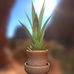 indoor plant 3d 3ds